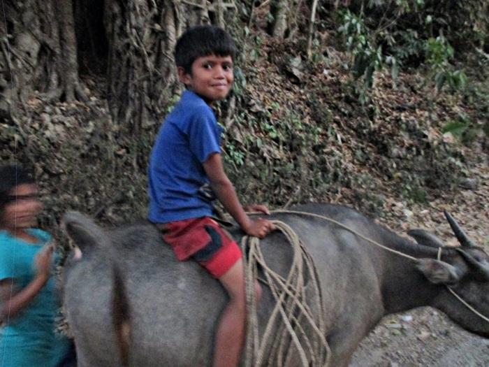 Niños subidos a búfalos es algo que si estás en Sumba verás continuamente